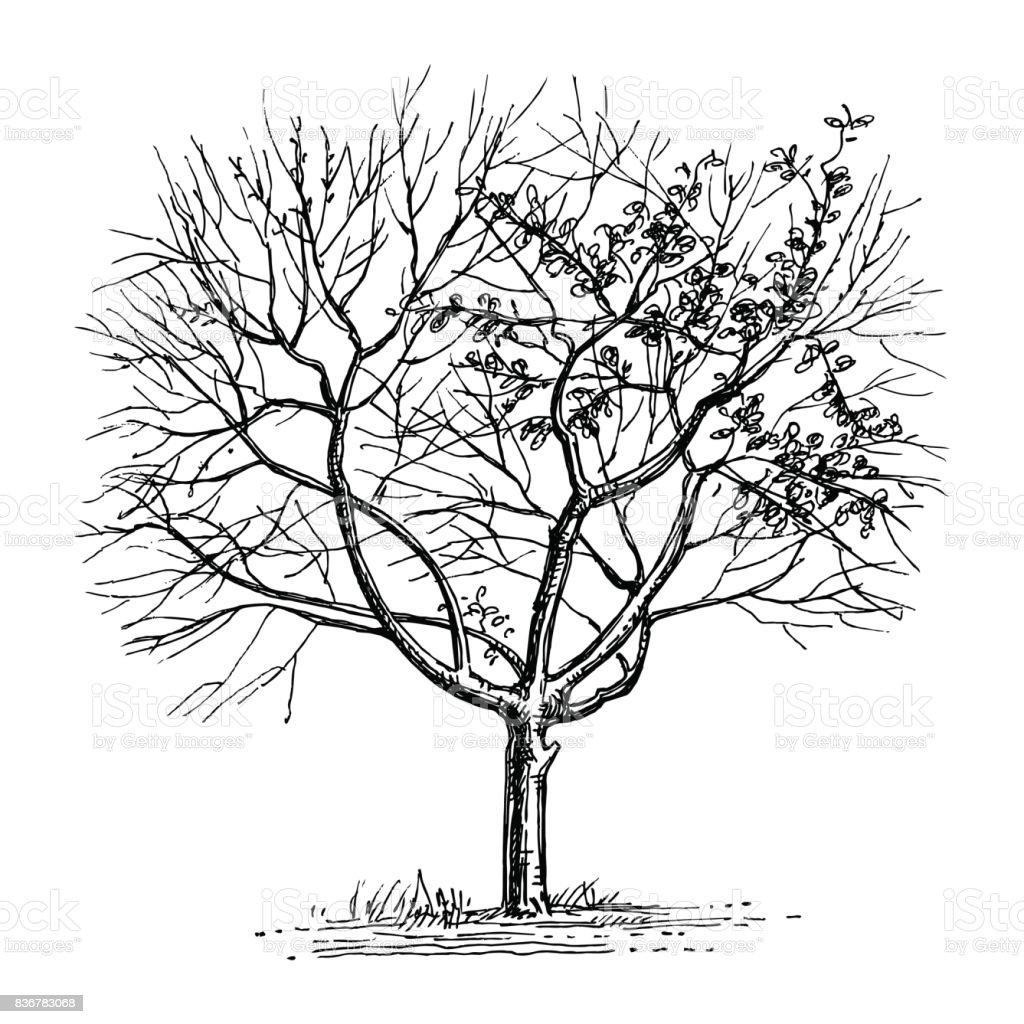 Dibujo tinta de árbol seco. - ilustración de arte vectorial