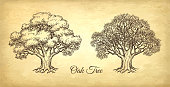 Ink sketch of two oaks. Winter and summer tree. Hand drawn vector illustration on old paper background. Retro style.