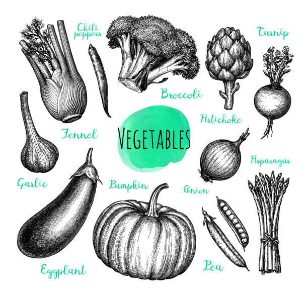 Ink sketch of vegetables. Vegetables set. Ink sketch isolated on white background. Hand drawn vector illustration. Retro style. artichoke stock illustrations