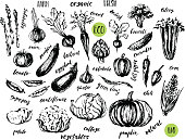 Ink sketch of vegetables with hand lettering names.