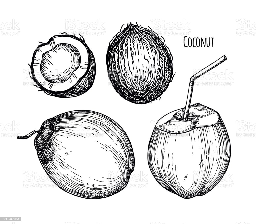 Ink Sketch Of Young Green Coconuts Royalty Free