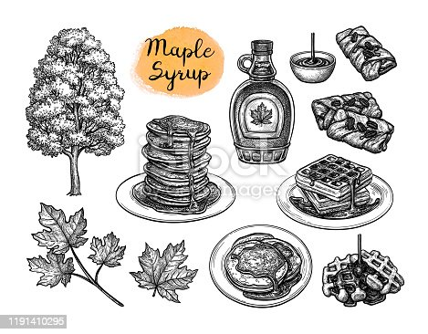 Popular pastries with maple syrup topping. Tree and leaf. Collection of ink sketches isolated on white background. Hand drawn vector illustration. Retro style.