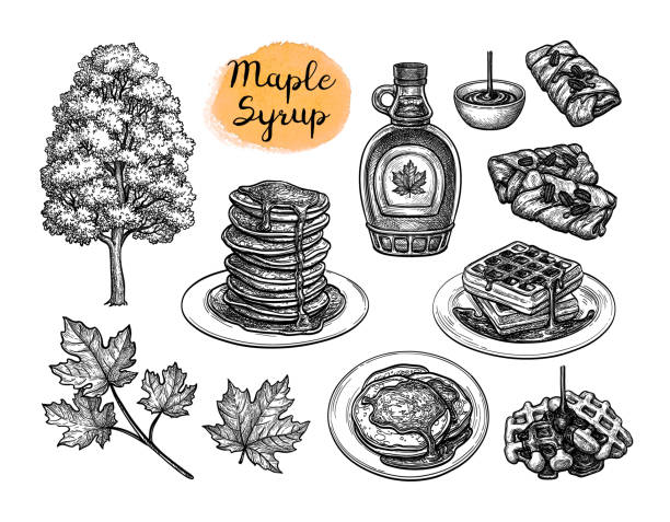 Ink sketches of desserts with maple syrup. Popular pastries with maple syrup topping. Tree and leaf. Collection of ink sketches isolated on white background. Hand drawn vector illustration. Retro style. maple syrup stock illustrations