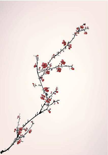 ink winter sweet ink winter sweet plum blossom stock illustrations