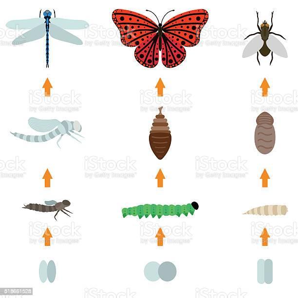 Insect birth life vector id518661528?b=1&k=6&m=518661528&s=612x612&h=mfbdh2oi ldlpht8zvrfp4cvb7ahvkc5lb5wwj4hfu0=