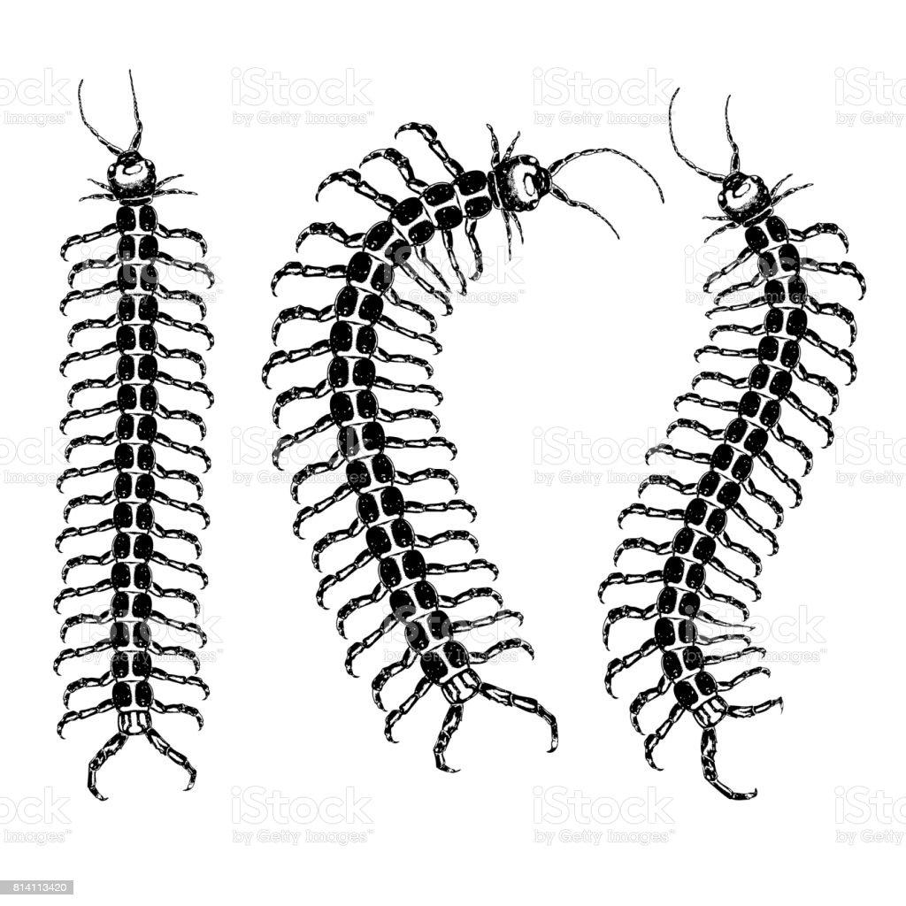 royalty free centipede clip art vector images illustrations istock rh istockphoto com