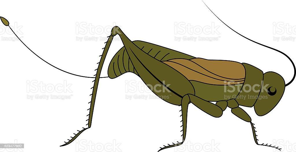 Insect. Cute cartoon grasshopper. vector art illustration