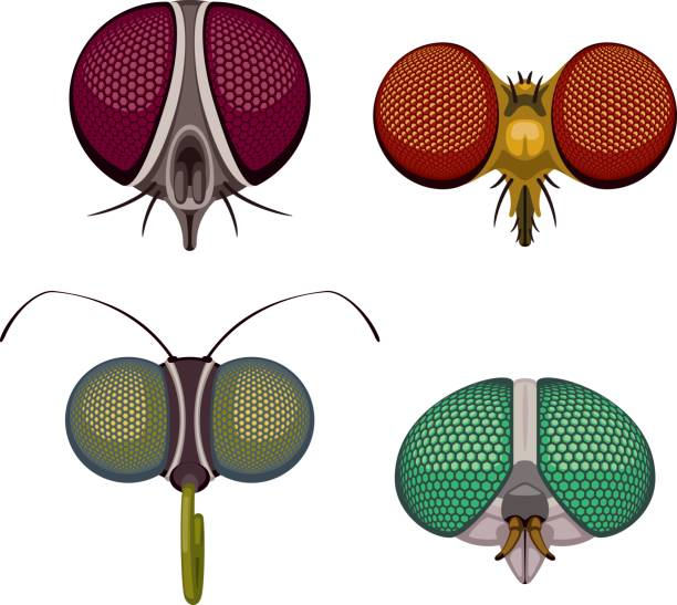 insect eyes - fly insect stock illustrations