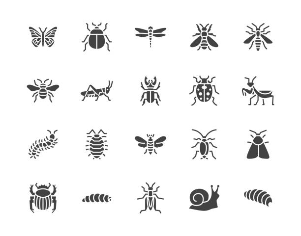 Insect flat glyph icons set. Butterfly, bug, dung beetle, grasshopper, cockroach, scarab, bee, caterpillar vector illustrations. Black signs for insects pest. Silhouette pictogram pixel perfect 64x64 Insect flat glyph icons set. Butterfly, bug, dung beetle, grasshopper, cockroach, scarab, bee, caterpillar vector illustrations. Black signs for insects pest. Silhouette pictogram pixel perfect 64x64. insects stock illustrations