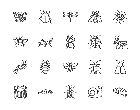 Insect flat line icons set. Butterfly, bug, dung beetle, grasshopper, cockroach, scarab, bee, caterpillar vector illustrations. Outline signs for insects pest. Pixel perfect 64x64. Editable Strokes