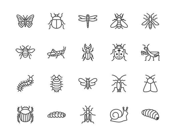 Insect flat line icons set. Butterfly, bug, dung beetle, grasshopper, cockroach, scarab, bee, caterpillar vector illustrations. Outline signs for insects pest. Pixel perfect 64x64. Editable Strokes Insect flat line icons set. Butterfly, bug, dung beetle, grasshopper, cockroach, scarab, bee, caterpillar vector illustrations. Outline signs for insects pest. Pixel perfect 64x64. Editable Strokes. mollusk stock illustrations