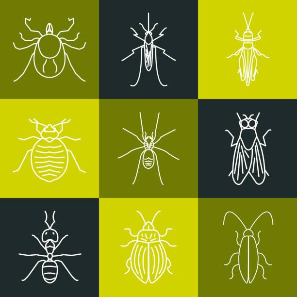 insekt grün linie symbol-set - mückenfalle stock-grafiken, -clipart, -cartoons und -symbole
