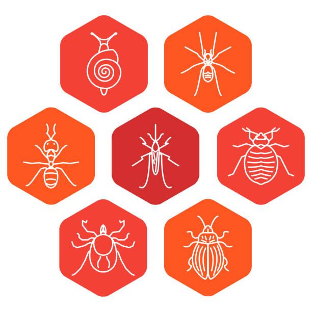 insekt sechseck set - mückenfalle stock-grafiken, -clipart, -cartoons und -symbole