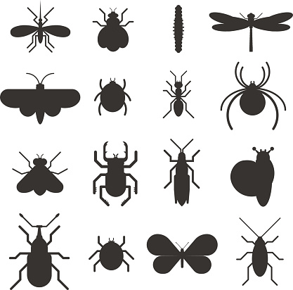 Insect icon black silhouette  flat set isolated on white background