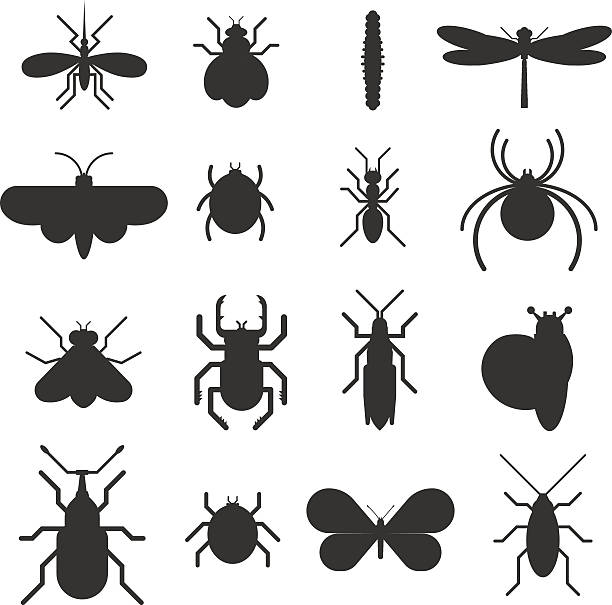 Insect icon black silhouette  flat set isolated on white background Insect icons black silhouette flat set isolated on white background. Insects flat icons vector illustration. Nature flying insects isolated icons. Ladybird, butterfly, beetle vector ant. Vector insects fly insect stock illustrations