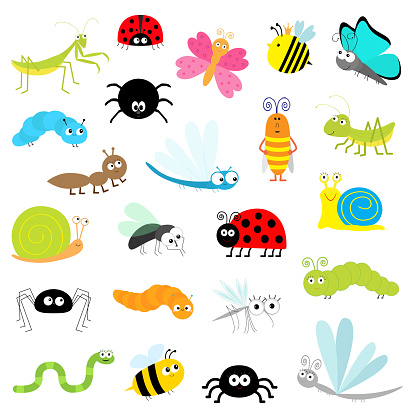 Insect icon set. Mantis Lady bug Mosquito Butterfly Bee Grasshopper Beetle Caterpillar Spider Cockroach Fly Snail Dragonfly Ant Lady bird Worm. Cute cartoon kawaii funny doodle character. Flat design.