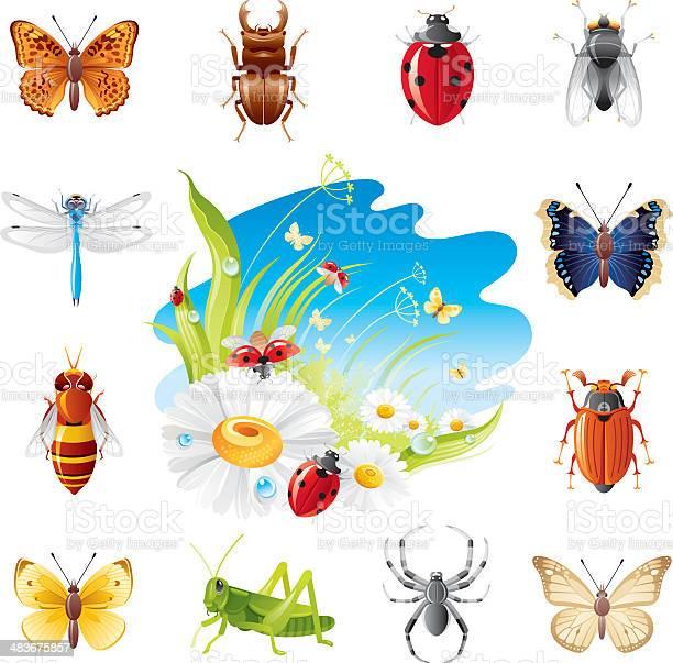 Insect icon set vector id483675857?b=1&k=6&m=483675857&s=612x612&h=wv mqww rfastwugwjd81rvtiakuc5huokpo5wftv1o=