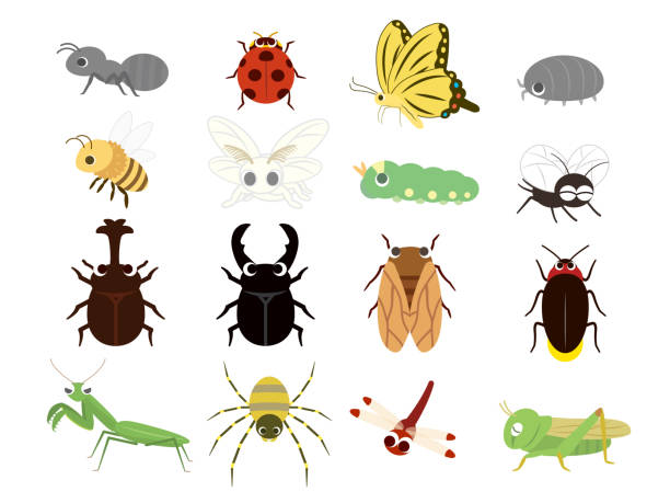 insect icon set1 - bugs stock illustrations