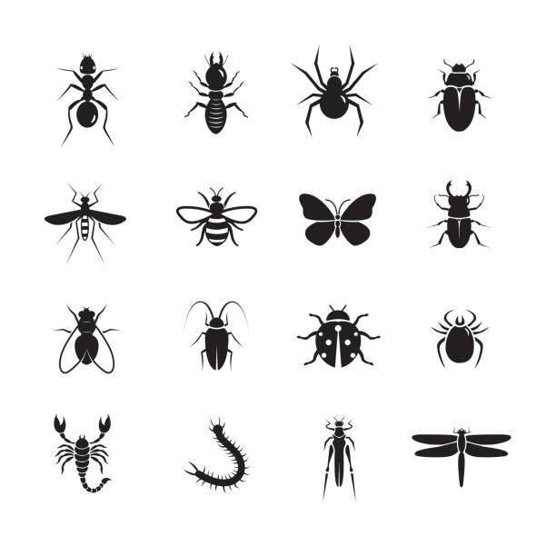 Insect icon Insect icon, set of 16 editable filled, Simple clearly defined shapes in one color. fly insect stock illustrations