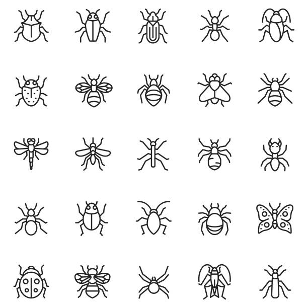 Insect icon vector set Insect icon vector set butterfly insect stock illustrations