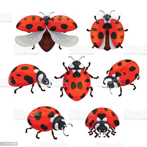Insect ladybird set cute small red bugs vector id1144378835?b=1&k=6&m=1144378835&s=612x612&h=oqqvbe3gagdlejksl0q3rrnit4hkciztwt6bkdvhage=