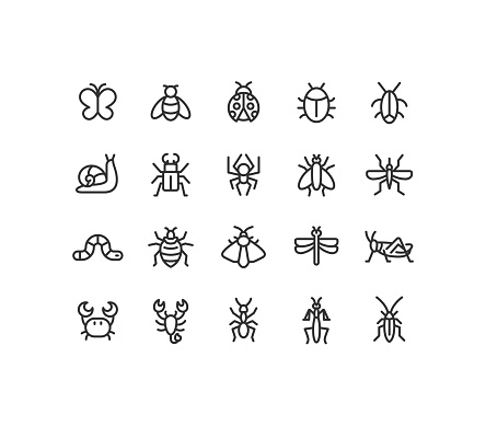 Insect Line Icons Editable Stroke