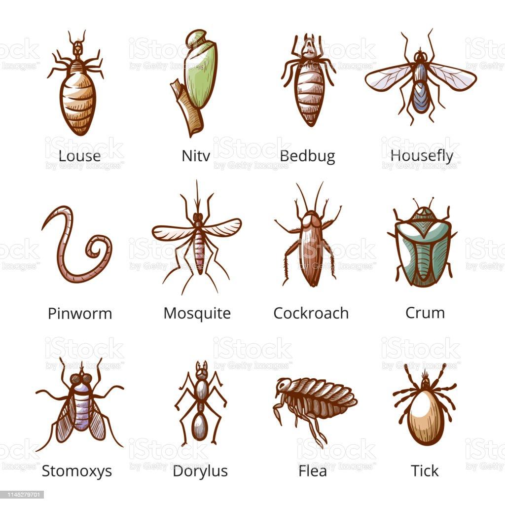 parasito de insectos