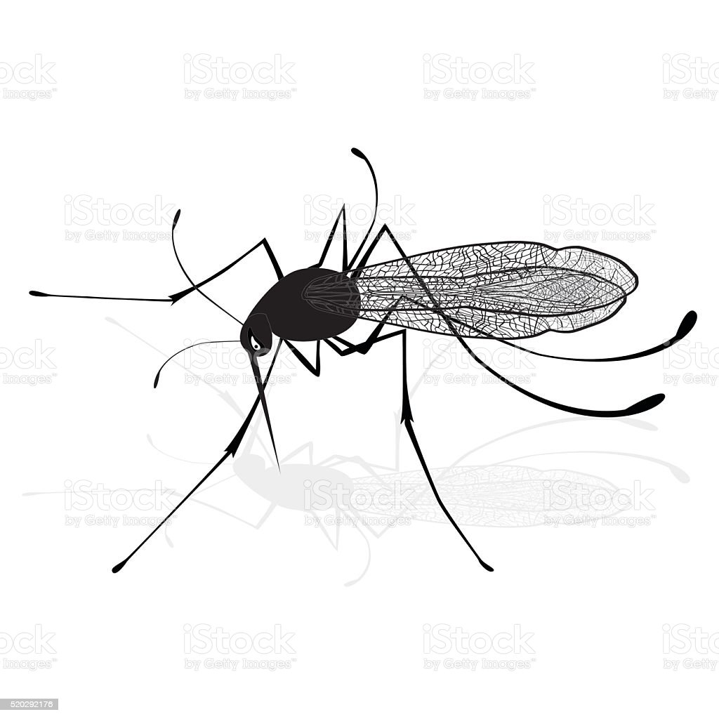 Insect realistic gnat mosquito silhouette isolated. Vector sketch illustration vector art illustration