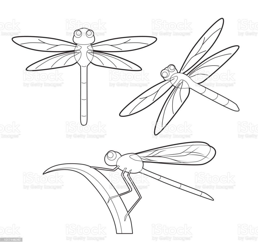 Ilustración De Insectos Libélula Lindo Set Vector De Dibujos