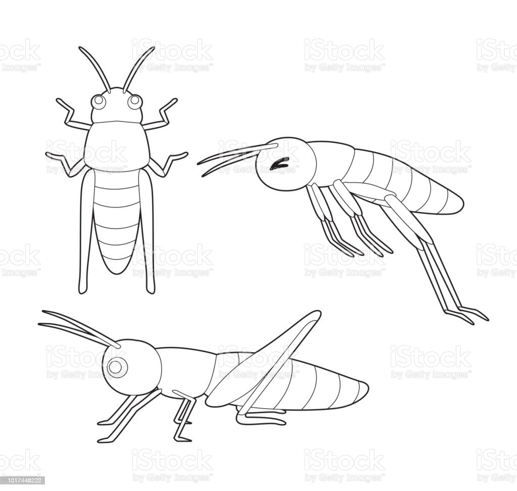 Ilustración De Vector De Dibujos Animados De Insectos