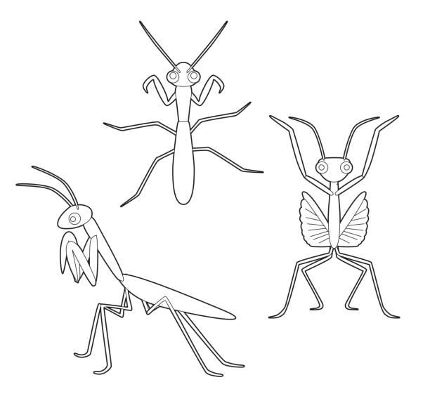 Vectores de Insecto De Historieta Preying Mantis Religiosa Insecto e ...
