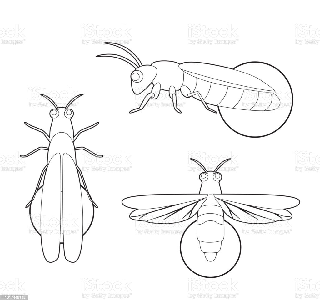 Insect Set Firefly Cartoon Vector Coloring Book Stock Vector Art