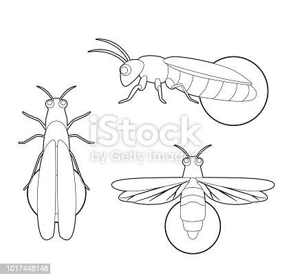 Böcek Set Firefly Karikatür Vektör Boyama Kitabı Stok Vektör Sanatı