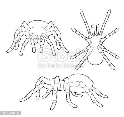 Ilustración de Vector De Dibujos Animados Insectos Tarántula Set ...