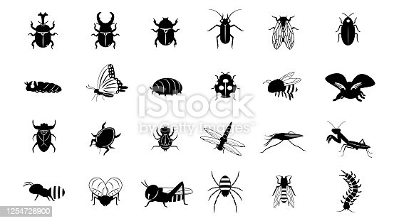 It is an illustration of a Insect set.