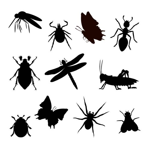 Insect silhouette black Insekt Silhouette schwarz isoliert weißer Hintergrund insects stock illustrations