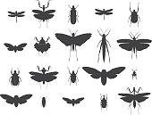 A set of a highly detailed insect silhouettes. Included files; Aics3, Hi-res jpg.