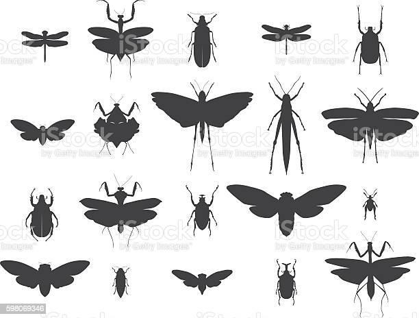 Insect silhouettes set vector id598069346?b=1&k=6&m=598069346&s=612x612&h=rno1dq728e6tkpkupn4a3k0susez 5yaem3nzubgrlq=