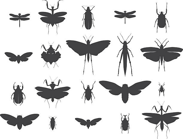 insect silhouettes set - bugs stock illustrations, clip art, cartoons, & icons