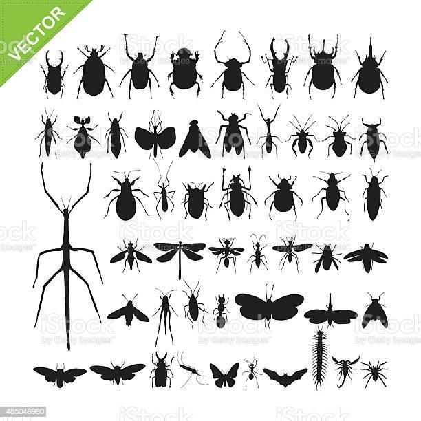 Insect silhouettes vector vector id485046980?b=1&k=6&m=485046980&s=612x612&h=8ovzm4kh0jk llo0y9ej0qq2yno5celwvyatqcxvmqe=