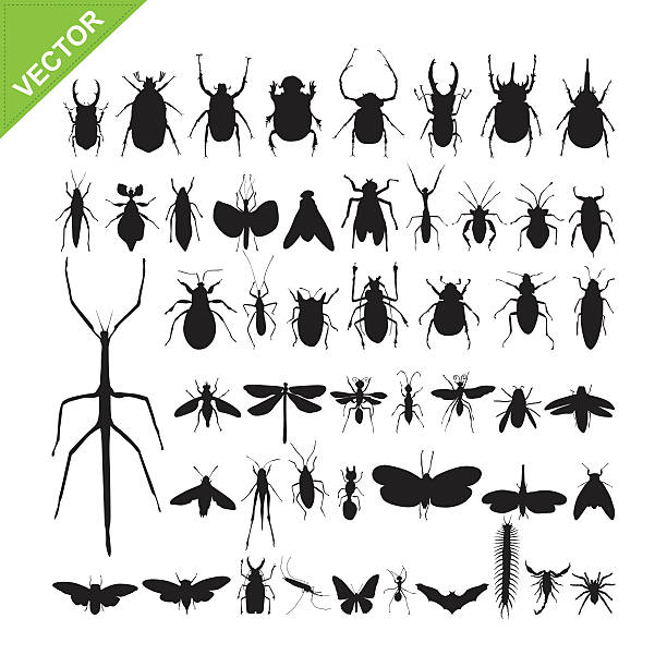insect silhouettes vector - bugs stock illustrations, clip art, cartoons, & icons