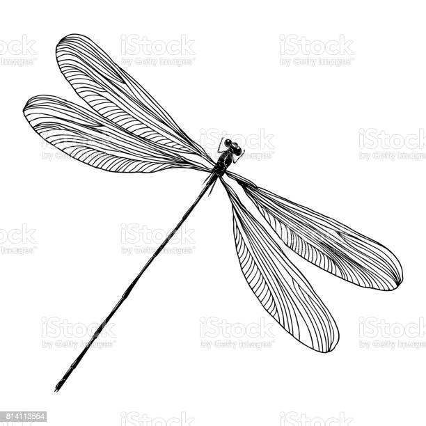 Insect stipple drawing isolated dragonfly and bug in trendy and vector id814113554?b=1&k=6&m=814113554&s=612x612&h=jy9uyqujopfqrs2wdasabl4tuol3zgx4mkbmljbtqxs=
