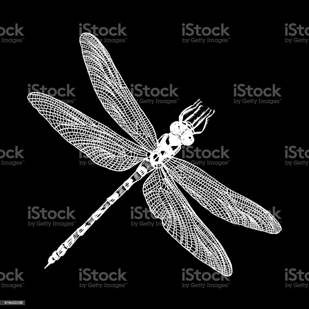 Insect stipple drawing isolated. Dragonfly and bug in trendy embroidery stippling and hatching, shading style. Vector. vector art illustration