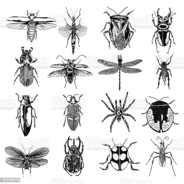 Insect stipple drawing set isolated insects and bugs collection in vector id875493278?b=1&k=6&m=875493278&s=612x612&h=w 8xvgzszgw0gnudugoif2iuzzxgcltfsawklrhlpy0=