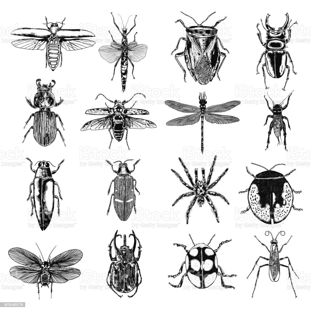 Insect stipple drawing set isolated. Insects and bugs collection in trendy embroidery stippling and hatching, shading style. Vector. vector art illustration