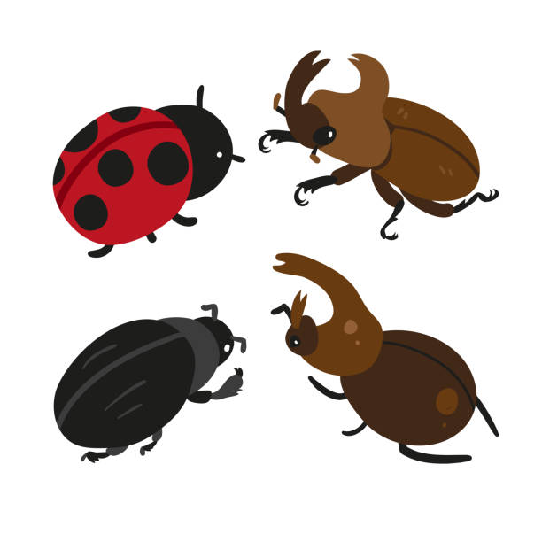 insect vector collection design insect vector collection design beetle stock illustrations