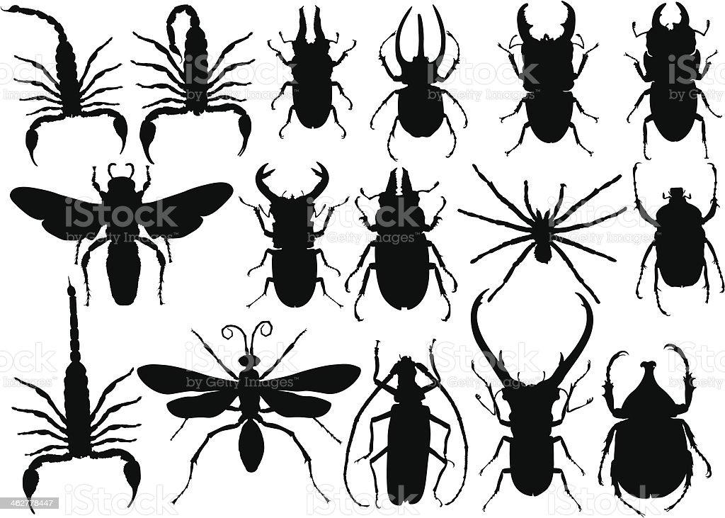 곤충 - 로열티 프리 거미 벡터 아트