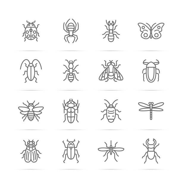insect vector line icons vector art illustration
