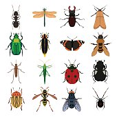 Insect vector set. Butterfly, wasp, tick, ant, dragonfly, beetle, grasshopper, locust, fly, bumblebee and other