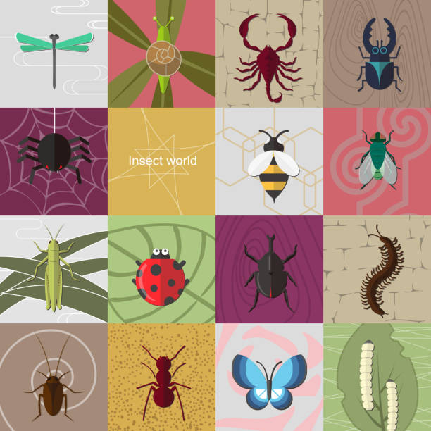 stockillustraties, clipart, cartoons en iconen met insect world - zijdeworm